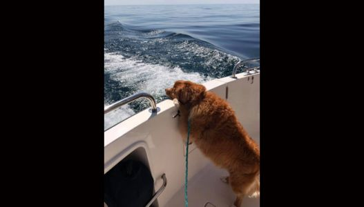 Family out boating rescues dog from Lake Michigan