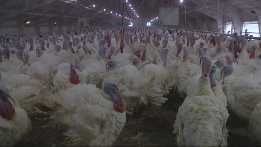 Survey: Annual Price of Thanksgiving Meal Decreases Slightly