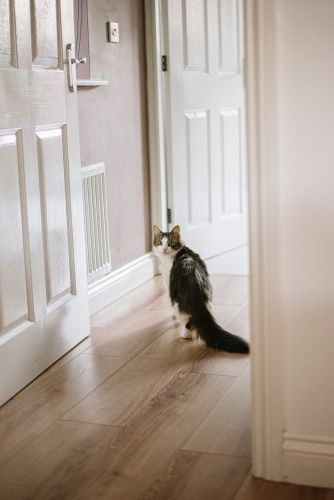 Does Your Cat Wait For You Outside the Bathroom? Here's Why
