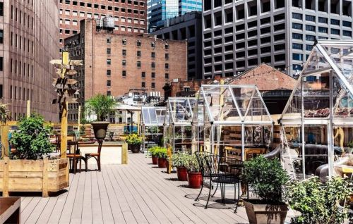 Rooftop eatery features private greenhouses for socially distanced dining
