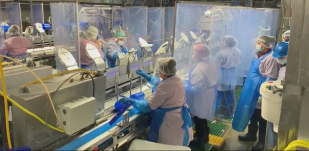 Meatpacker Offering Financial Incentive for Workers Who Get COVID-19 Vaccine