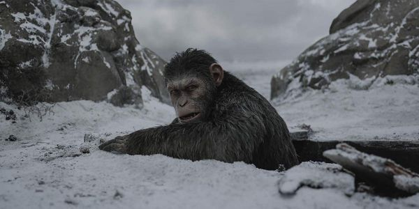 The Next Planet Of The Apes Movie Will Reportedly Be Another Reboot