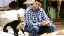 'Friends' Monkey Trainer Brands David Schwimmer 'Despicable' Over Marcel Digs