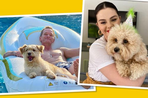 Best star snaps of the week: Celebs enjoy the dog days of summer