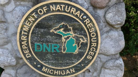 Michigan DNR: Mute swan deaths not due to poisoning