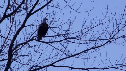 The Eagles Of Downtown Des Moines