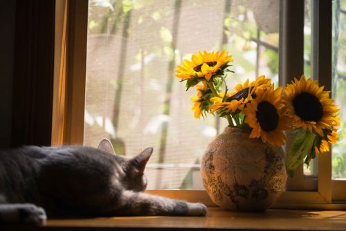 Your Cat Can Get a Sunburn from Laying By a Window - Here's What Vets Want You to Know